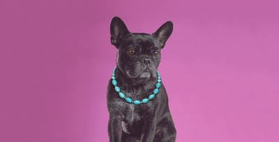 Dog Photo Shoot, from £19