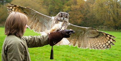 Falconry Experience in Glasgow, from £18
